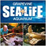 AD: Grapevine SEA LIFE Aquarium #coupon