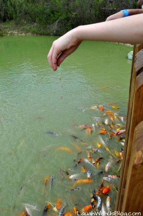 Who is going to feed my fish?