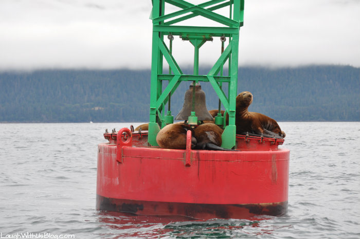 Seal Lions on a buoy Alaska
