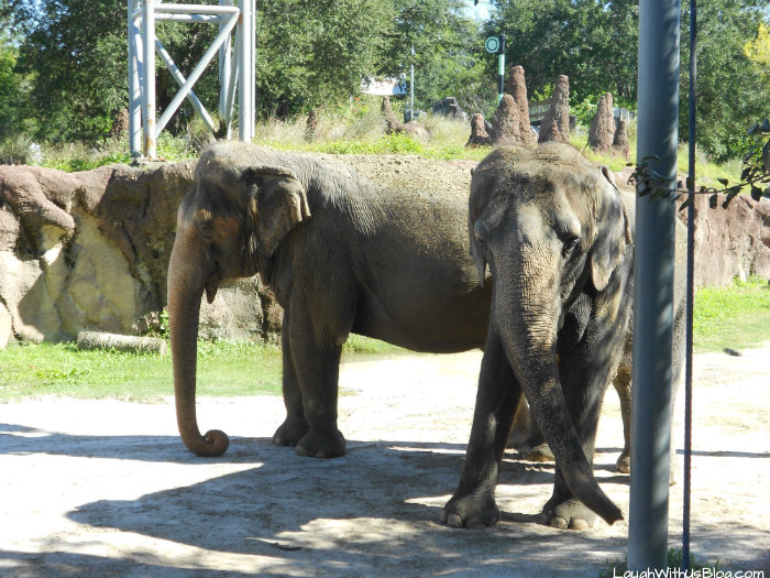 Busch Gardens Elephant #ad