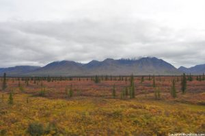 Alaska Countryside from the GoldStar Dome Train