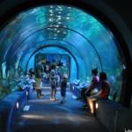Moody Gardens Aquarium and more!
