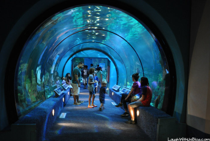 Perfect Moody Gardens Aquarium And More Laugh With Us Blog