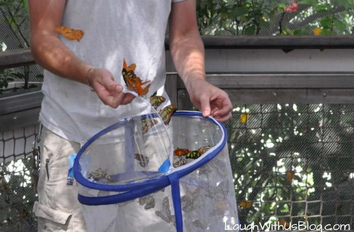 Moody Gardens Butterfly Release #ad