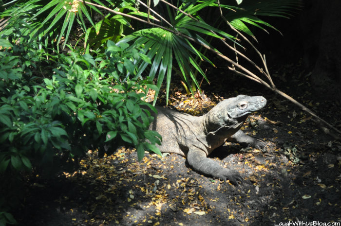 Moody Gardens Komodo Dragon #ad