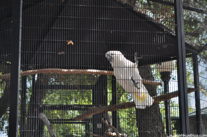 Parrot at SeaWorld Texas #adventurecon15 #wildside15