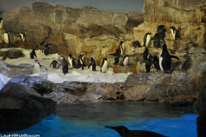 Penguins at SeaWorld Texas #adventurecon15 #wildside15
