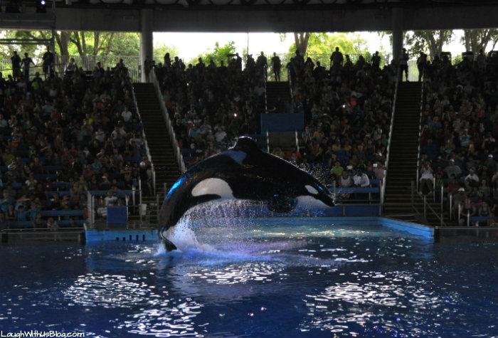Shamu SeaWorld Texas #AdventureCon15 #Wildside15