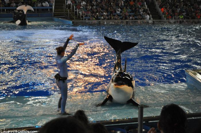 The Shamu Show SeaWorld Texas #AdventureCon15 #Wildside15