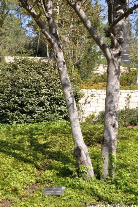 Holocaust History Museum Schindler's Tree
