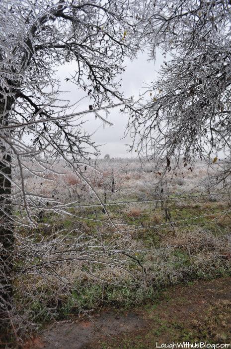 Oklahoma City Ice Storm beauty