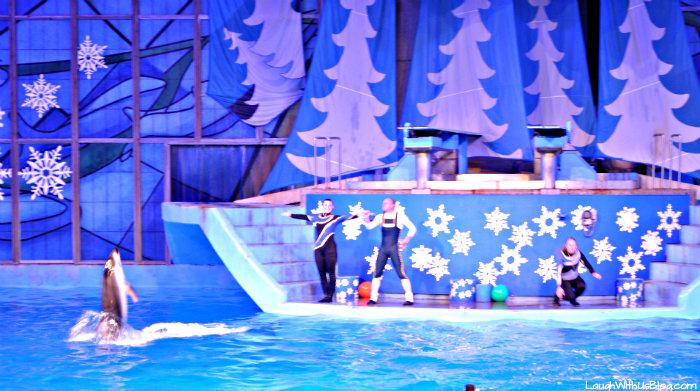 SeaWorld Christmas A Dolphin Christmas