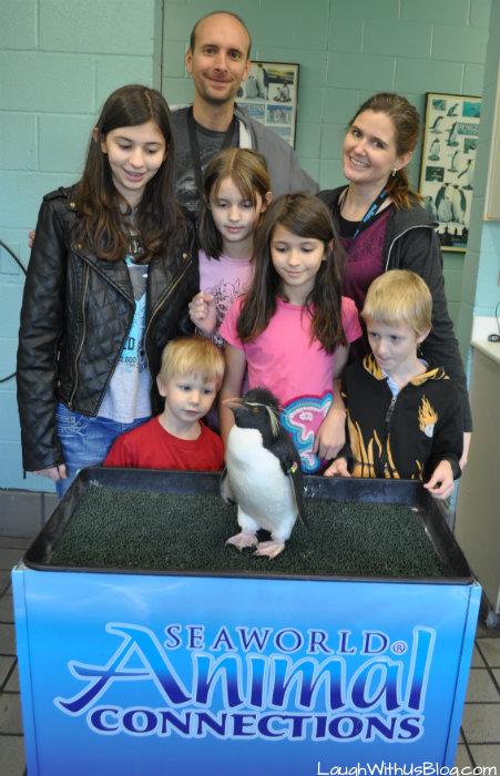SeaWorld Texas Animal Connections Penguins