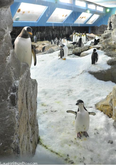 SeaWorld Texas Penguin Tour