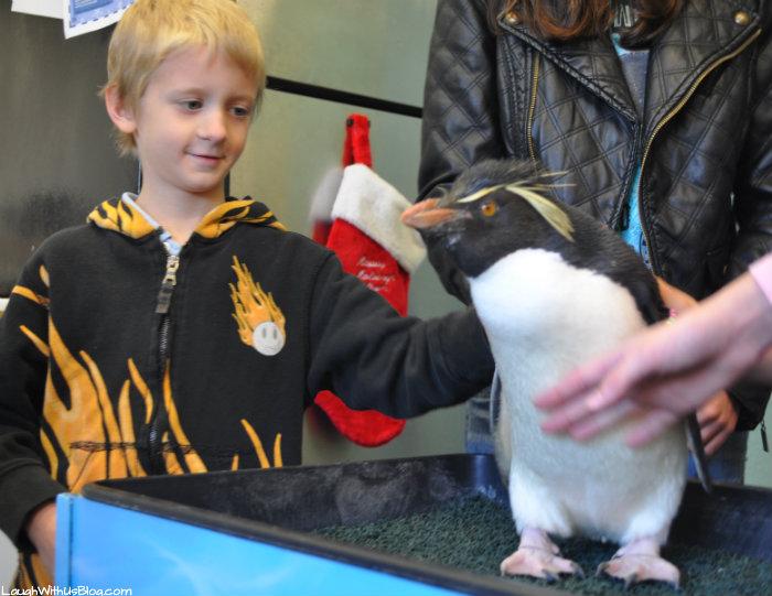 SeaWorld Texas Penguin Tours Pet a penguin