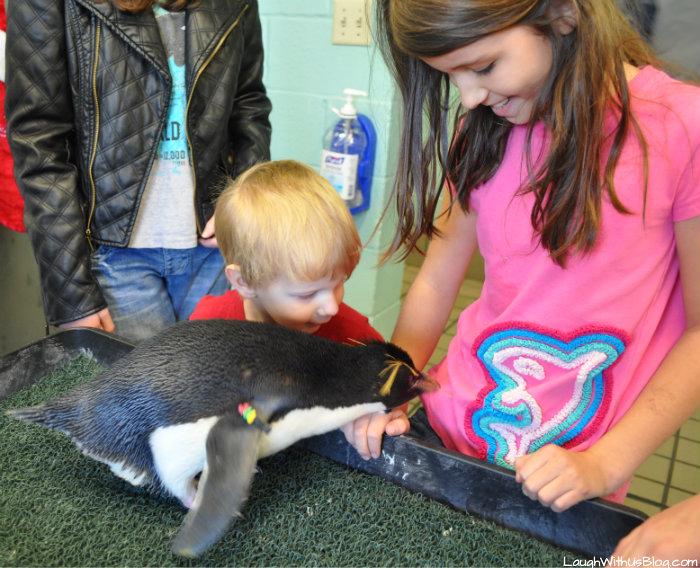 SeaWorld Texas Penguin Tours touch a live penguin