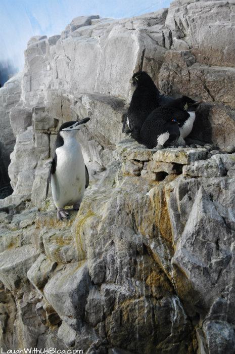 SeaWorldTexas Penguin Tours