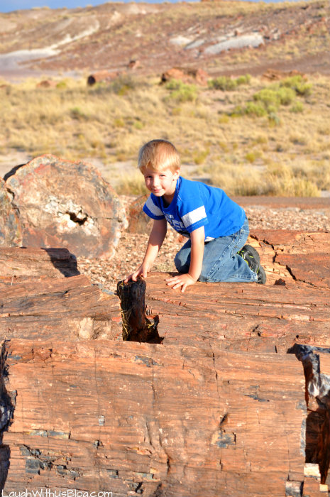 climbing-on-petrified-wood