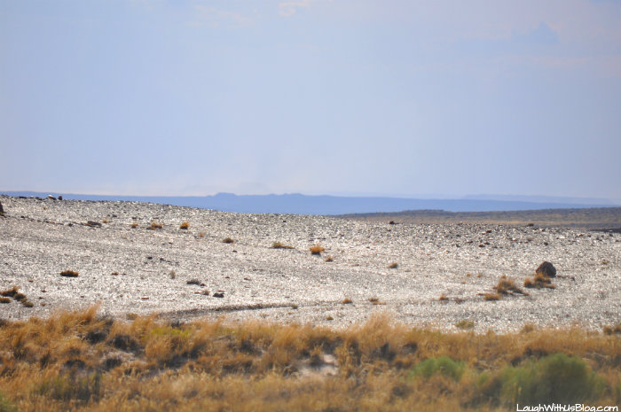 crystal-desert-petrified-forest-national-park