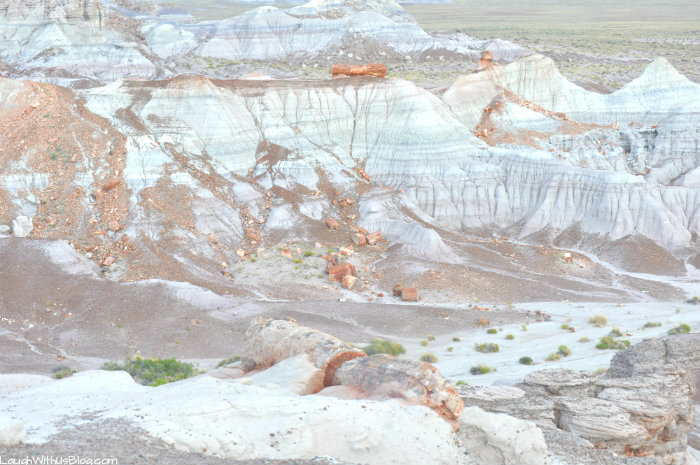 petrified-wood-in-petrified-forest-national-park