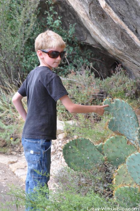 walnut-canyon-cactus