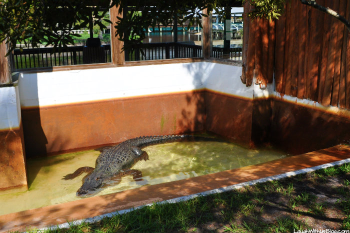gatorland-chester-the-voice-of-smaug