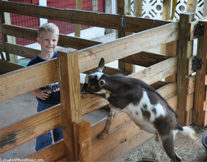 gatorland-goats