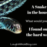 A Snake in the House