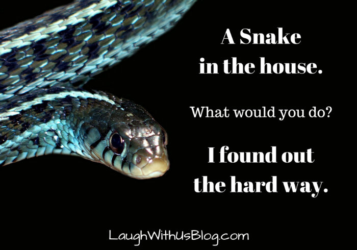A Snake in the house...
