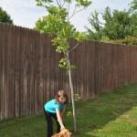 Plant some trees!