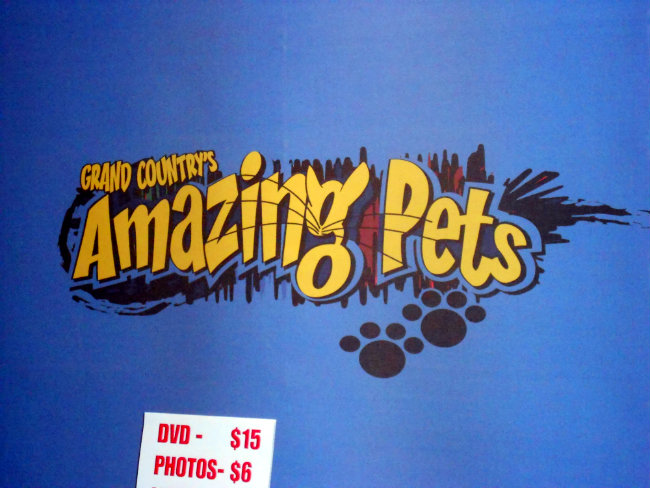 Grand Country's Amazing Pets