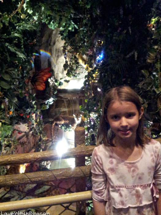 at the rainforest cafe
