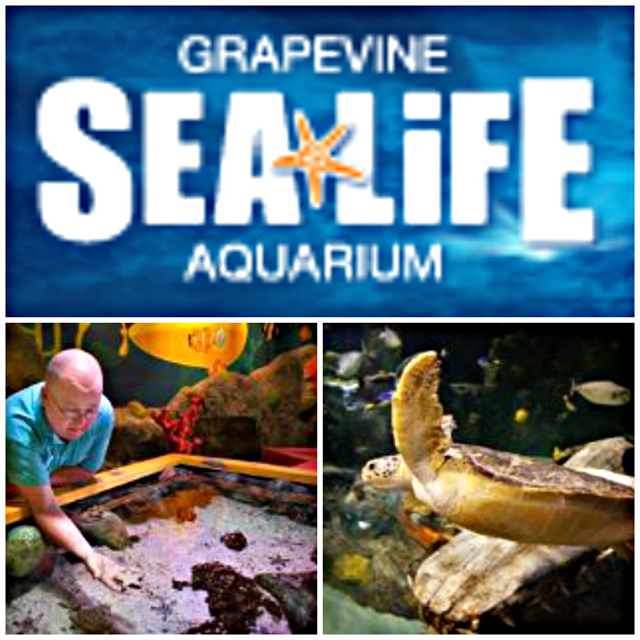 Ad Kids Go Free To Grapevine Sea Life Aquarium Coupon
