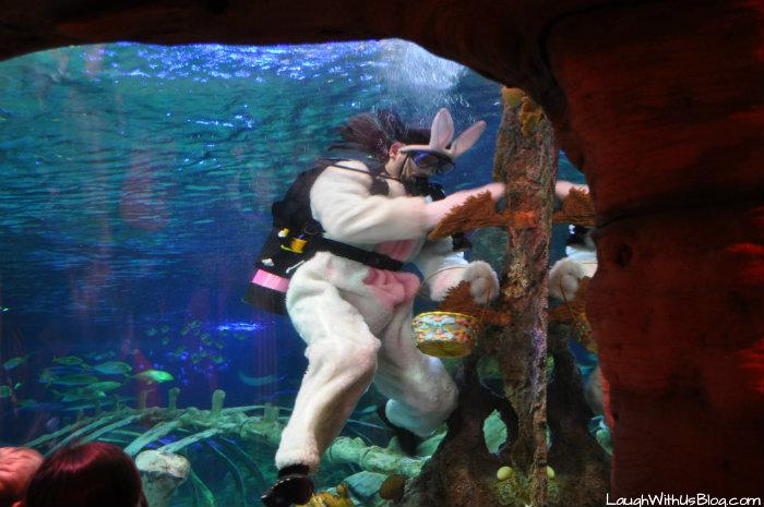 Scuba Bunny Sea life #ad