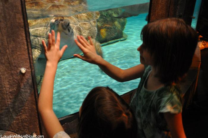 Sea Turtle at Sea Life Grapevine #ad