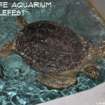 It's #TurtleFest at SEA LIFE Aquarium! Grapevine, TX