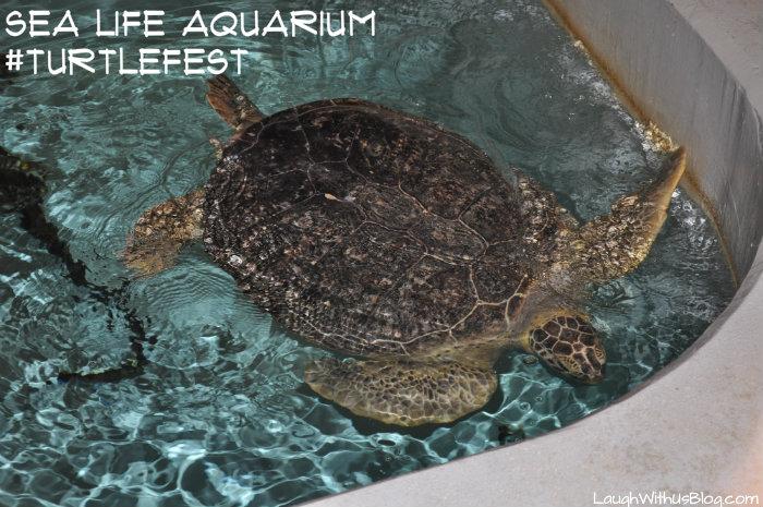 SEALIFE Aquarium #TurtleFest