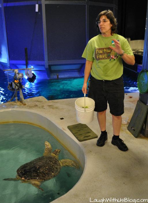 #TurtleFest Sea Life Aquarium