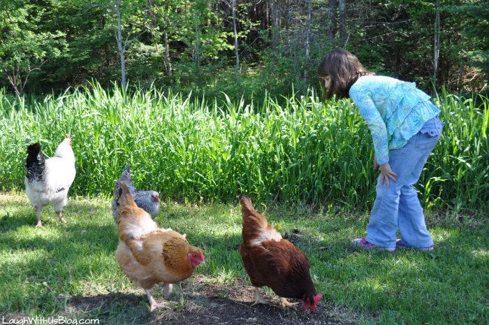 Fun feeding chickens