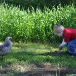 Fun feeding the Chickens