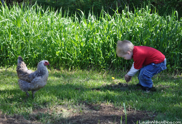 Kids love feeding chickens