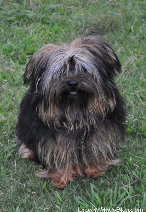 Puppy love Bayer K9 Advantix #sponsosred