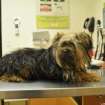 Optimum Wellness at Banfield Pet Hospital®