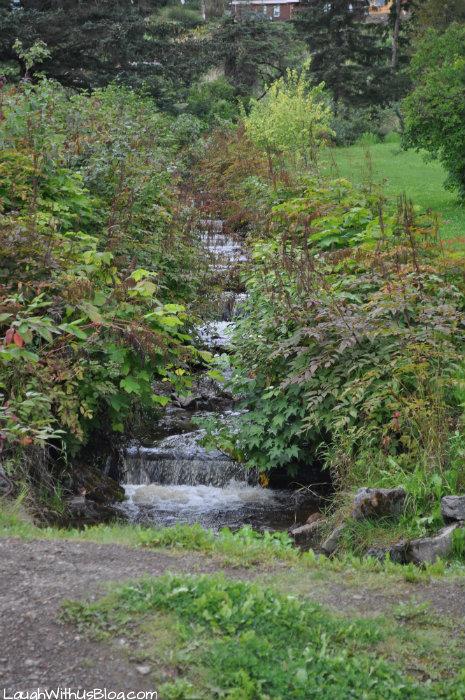 Stream beside the road in Hoonah Alaska