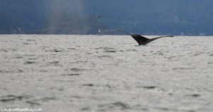Whale Watching Adventure Juneau, Alaska