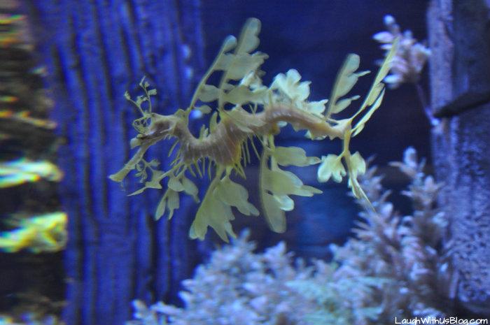 Sea horse at Sea World Orlando #ad