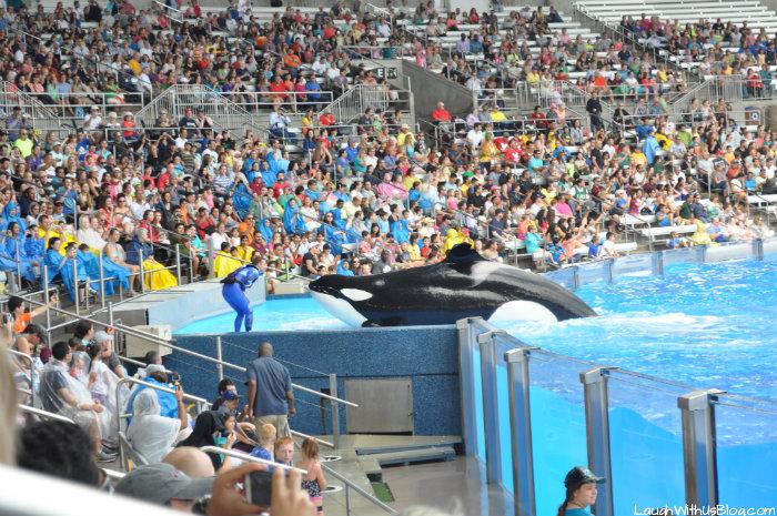 Shamu at Sea World Orlando #ad