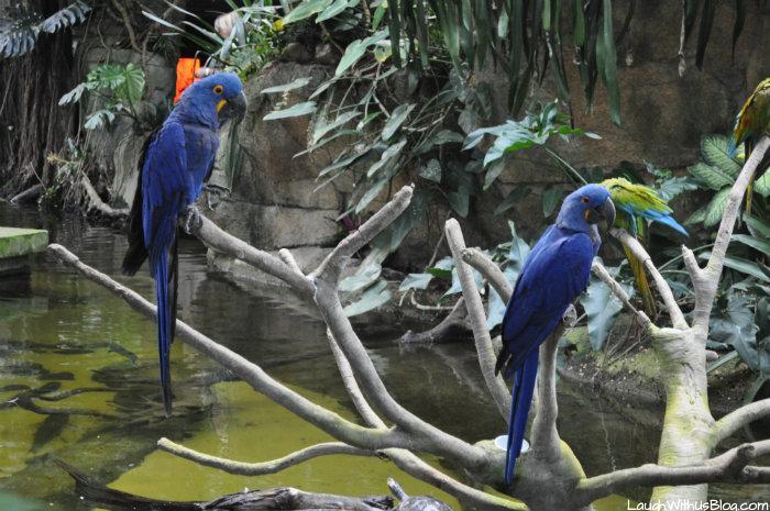 Moody Gardens Blue Birds #ad