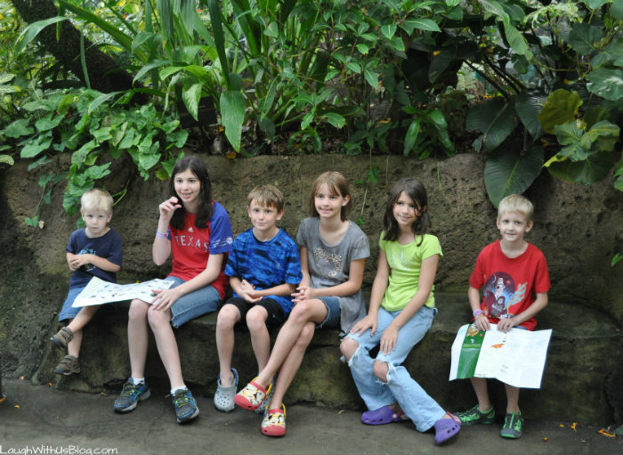 Moody Gardens Rainforest Pyramid #ad
