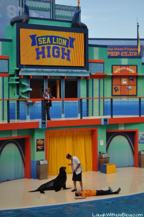 Sea Lion High #AdventureCon15 #Wildside15